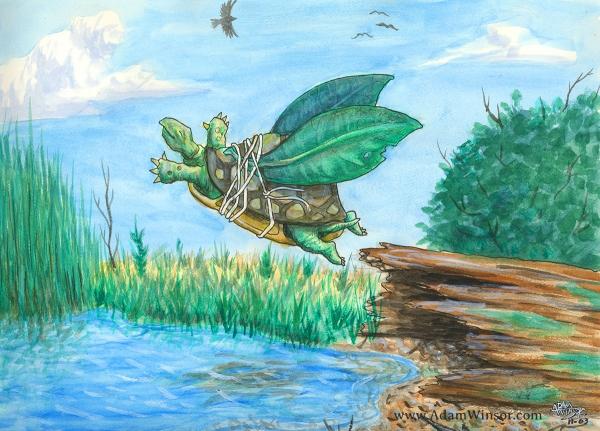 Turtle 2003