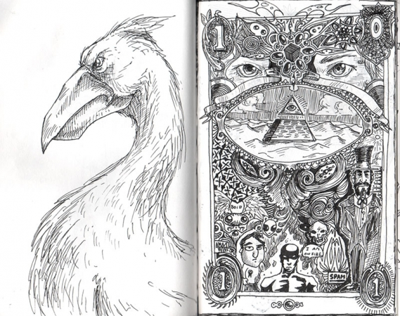 Pelican Dollar